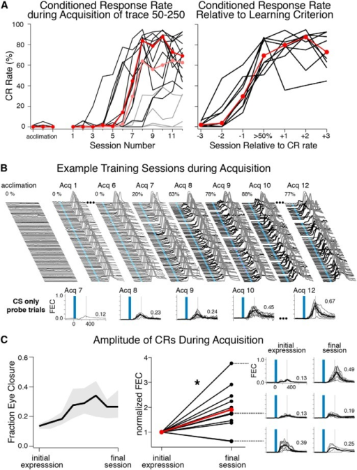 Acquisition rates, example behavior, and CR amplitudes for mice trained using a trace 50–250 protocol. A, CR rates for 16 mice over 12 training sessions. Note that mice showed very low spontaneous blink rates during acclimation sessions, during which no conditioning stimuli were presented (left graph). Most mice (12/16, black lines) learned to a criterion of >50% CRs within 12 sessions (median CR rate each session for learners is shown in red; light gray lines show mice that failed to meet criterion, and light red shows median CR rates for all 16 mice). When aligned to criterion sessions the data show that mice increased expression at similar rates (right graph, red markers denote median CR rates), even though the onset of learning varied across mice. B, Example acclimation and acquisition sessions for one mouse. Like all mice studied here, this mouse showed low spontaneous blink rates during acclimation and initial training sessions (left waterfall plots). Note the expression of CRs reached asymptotic levels by Acq 9 (right waterfall plots), whereas the amplitude of CRs continued to increase over several additional sessions (most clearly observed in overlaid probe trials, bottom graphs). C, Left graph shows the median (black line) and interquartile range (gray shaded area) for the amplitude of CRs measured from probe trials for the 12 learners. Most mice showed significant increases in the amplitude of CRs between initial expression and the last training session (middle graph, paired t test, t = 2.73, df = 11, p = 0.02; examples for 3 mice given in right graphs, including one of the two mice that showed the opposite trend, numbers indicate median amplitude for that session).