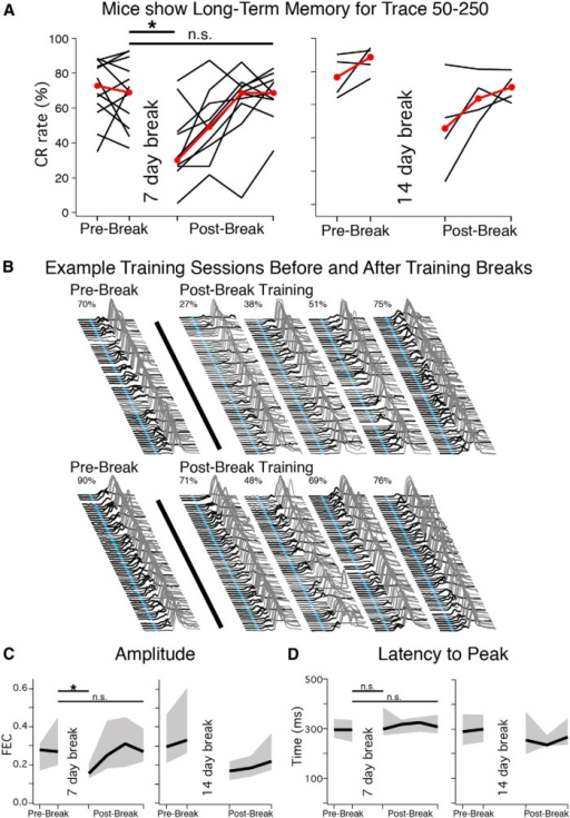 Trained mice receiving a 7 (n = 10) or 14 d (n = 4) break in training showed long-term memory for the task. A, Asymptotic (Prebreak) CR rates and postbreak performance for mice that received a 7 (left) or 14 d (right) break in training (shown separately but analyzed together). Red markers indicate median observed each day. Mice showed a significant decrease in performance during the first postbreak sessions (paired t = 5.69, df = 13, p < 0.001), which recovered with additional training sessions (t = 1.02, p = 0.33). B, Example sessions from two mice before (Prebreak) and after (Postbreak) training breaks. Note that mice showed CRs early in the first postbreak session, even when overall performance was low (top), suggesting that mice remembered rather than quickly relearned the task. C, Similar to CR rate, CR amplitude decreased between prebreak and postbreak sessions (t = 3.99, p = 0.001), which recovered with additional training (t = 0.25, p = 0.81). D, In contrast, the appropriate timing for the task (latency to CR peak) was conserved between prebreak and postbreak sessions (t = 0.69, p = 0.51).