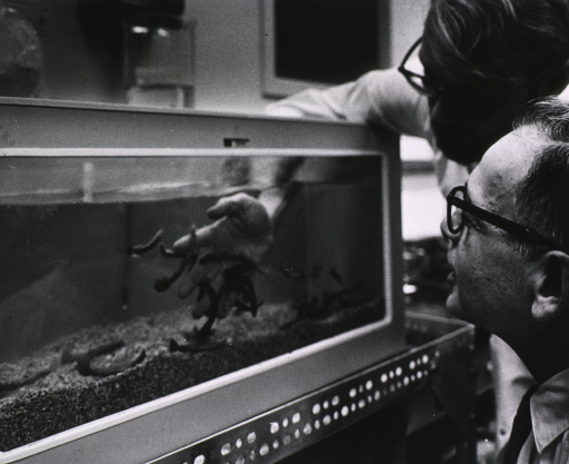 <p>Two men are looking at a tank of marine worms; one of the men has placed his right hand in the tank.</p>