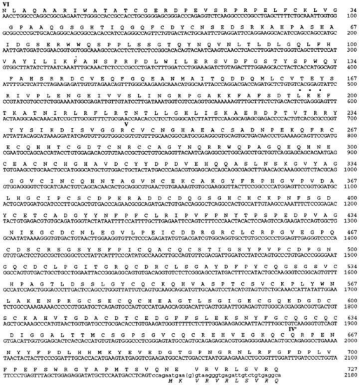 Nucleotide and deduced amino acid sequences of the lam | Open-i