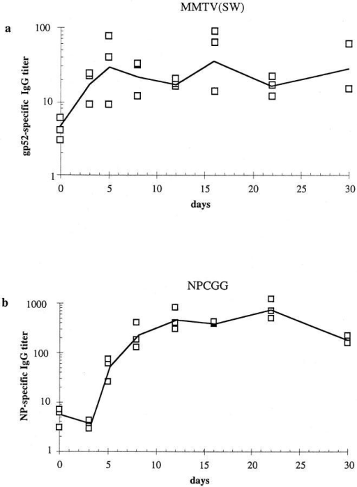 Kinetics of antigen-specific serum IgG antibody responses  following immunization with MMTV(SW) or NP-CGG into both footpads. (a) shows the titers against bacterially derived recombinant viral envelope protein gp52 of mice injected with MMTV(SW), and (b) shows  the anti-NP titers in mice immunized with alum-precipitated NP-CGG  plus B. pertussis. Shown are the individual values (squares) as well as the  mean (line).
