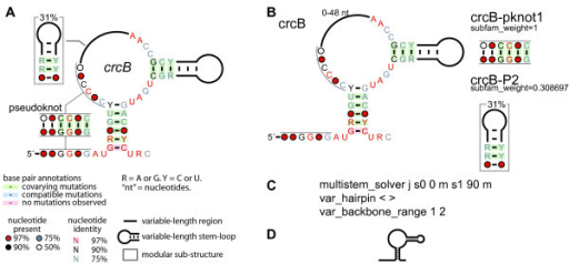 Example Of A Consensus Diagram For A Noncoding Rna A Open I