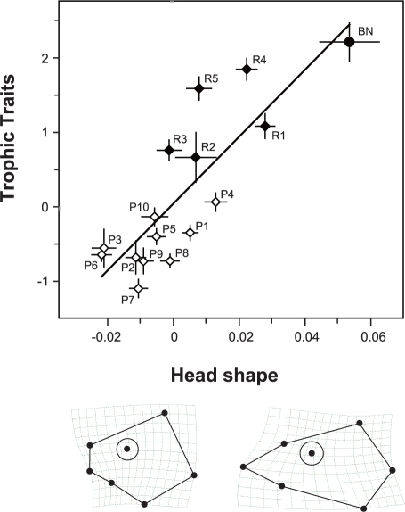 "Correlation of variations between head shape and trophic traits revealed by PLS analysis.Individuals were pooled for local populations, with bars showing standard deviations. The coefficients of each trophic trait for ""trophic traits"" axis were the following: ED, 0.498; ML, 0.339; JL, 0.373; MW, 0.129; HW, –0.694. Thin-plate spline grids represent the shape of individuals of plus and minus extremes (all magnified two times). Sample codes correspond to those in Figure 1A and Table 1."