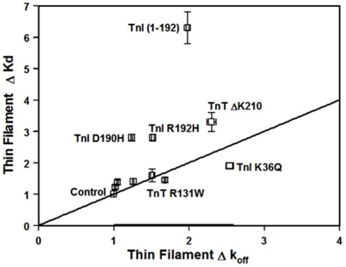 The relationship between changes in the Ca2+ sensitivity and the rate of Ca2+ dissociation.The changes in the thin filament Ca2+ sensitivity for the ten disease-related protein modifications are plotted against the changes in the rate of Ca2+ dissociation from the thin filament. The straight line in the figure represents a perfect correlation between the thin filament change in Ca2+ sensitivity and Ca2+ dissociation rate.