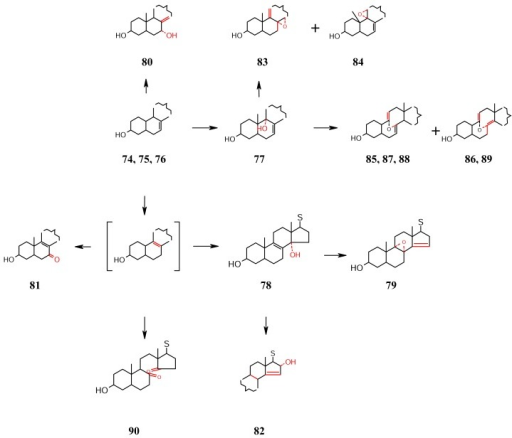 Δ7 sterols: Oxidation involving C-7, C-8, C-9, C-11, and C-14 ; [ ]: not isolated: S : side chain