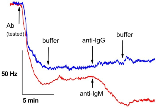 Isotyping of the mAb 4H3B9D3 using the piezoelectric sensor modified with LPS from F. tularensis. At first, the tested antibody was allowed to bind on the surface and after washing with buffer, either anti-IgG (blue curve) or anti-IgM (red curve) secondary antibody was injected.
