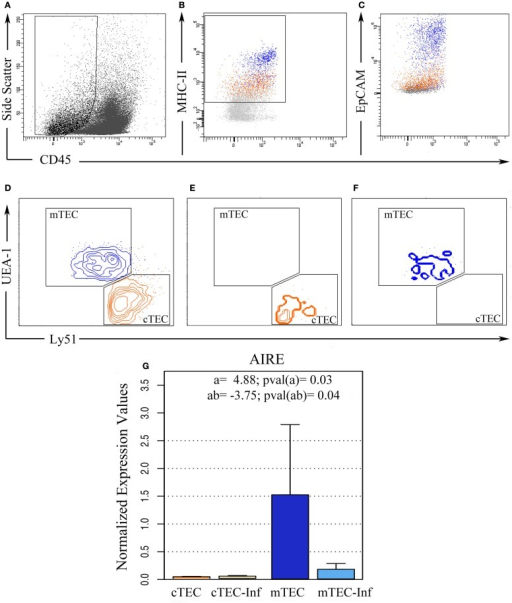"Ex vivo thymic epithelial cell sorting. Five replicates of thymic cell pools from control and infected mice were sorted using flow cytometry in order to isolate TEC. (A) Initially, CD45− cells were selected based on size, (B) from this population, MHC-II positive cells were isolated after EpCAM confirmation (C). (D) Then, according to UEA-1 and Ly51 surface markers, these cells were distinguished between cortical TEC (cTEC, Ly51+, and UEA−, orange) and medullary TEC (mTEC, Ly51−, and UEA+, blue) phenotypes. Post-sorting analysis revealed 98% purity in cTEC (E) while 95% purity in mTEC (F). (G) After miRNA isolation, the remaining mRNA from three experimental pools allowed us to analyze AIRE gene expression, confirming if the sorted cells matched the correct expected TEC profile. The bar plot represents the average expression in each condition. ""a"" indicates the magnitude of the expression ratio (log−2) due to TEC phenotype, whereas a positive value shows a higher expression in mTEC. ""ab"" indicates the expression ratio magnitude (in log−2) as consequence of the combination between infection and cell type, whereas a negative value shows that the AIRE expression in infected mTEC is lower than in control mTEC."