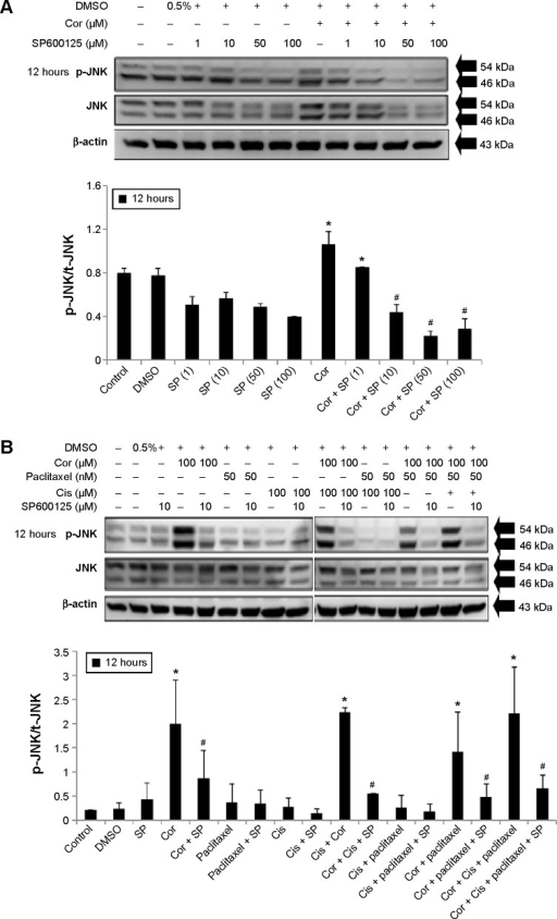 JNK inhibitor (SP600125) reversed phosphorylation of JNK induced by cordycepin + paclitaxel and/or cisplatin in MA-10 cells.Notes: The cells were pretreated with 1, 10, 50, and 100 μM SP600125 for 30 minutes, and then treated without or with 100 μM cordycepin and 1, 10, 50, and 100 μM SP600125 for 12 hours (A), or without or with 50 nM paclitaxel and/or 100 μM cisplatin +100 μM cordycepin and 10 μM SP600125 for 12 hours (B). Phosphorylated JNK (54/46 kDa) and t-JNK (54/46 kDa) were then detected by Western blots. The integrated optical density of p-JNK protein expression after normalization with t-JNK is demonstrated. Each datum point represents the mean ± standard error of the mean of three separate experiments. *Indicates a statistically significant difference compared with the control (P<0.05). #Indicates that the means are significantly (P<0.05) different compared with treatment.Abbreviations: p-, phosphorylated; t-, total; Cor, cordycepin; Cis, cisplatin; SP, SP600125; DMSO, dimethyl sulfoxide; JNK, c-Jun NH2-terminal kinase.