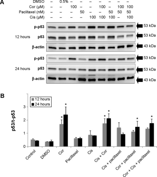 Effects of paclitaxel and/or cisplatin + cordycepin on the protein expression of p53 in MA-10 cells.Notes: The cells were then treated without or with 50 nM paclitaxel and/or 100 μM cisplatin +100 μM cordycepin for 12 and 24 hours. After the treatments, the p-p53 (53 kDa) protein was detected by Western blot (A). The immunoblot represents the observations from one single experiment reported three times. The integrated optical density of p-p53 was analyzed after normalization with t-p53 (53 kDa) in each lane (B). Each datum point represents the mean ± standard error of the mean of three separate experiments. *Indicates that the means are significantly different compared with control (P<0.05).Abbreviations: p-, phosphorylated; t-, total; Cor, cordycepin; Cis, cisplatin; DMSO, dimethyl sulfoxide.