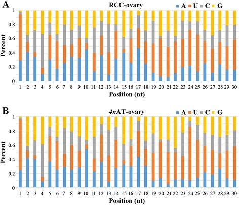 Base bias of small RNA at each position in diploid RCC (a) and 4nAT (b)
