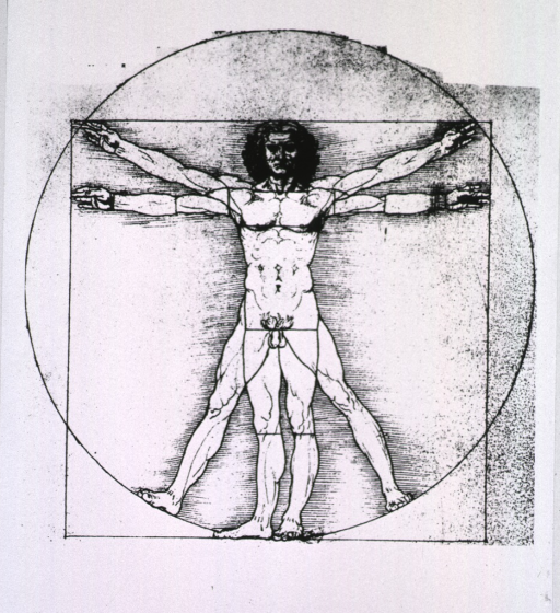 <p>Male figure demonstrating proportions, set in circle.</p>