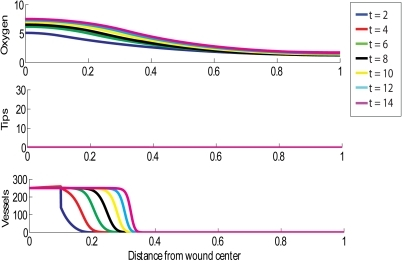 Simulation of the treatment of a chronic wound with HBOT for 1.5 hours per day, where the treatment is stopped after 5 days.Multiple day intervals are shown (dark blue = 2, red = 4, green = 6, black = 8, yellow = 10, light blue = 12, pink = 14). Parameter values: as per Fig 2, except .