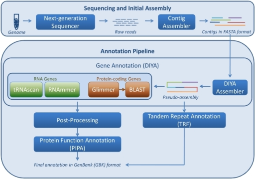 Schematic representation of the various tools of the genome                            annotation pipeline.Given assembled contigs in a FASTA format file, processing starts with                            the Do-It-Yourself Annotation (DIYA) genome annotation tool, followed by                            post-processing, tandem repeat annotation, and protein function                            prediction with Pipeline for Protein Annotation (PIPA).