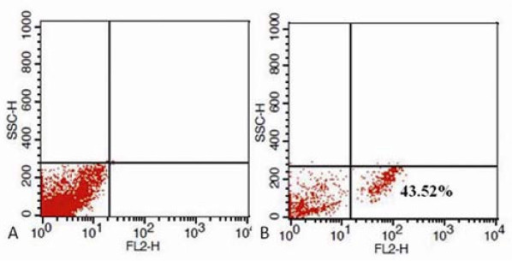 Flow cytometry analysis the amount of HEK293 cells labeled with FMNPs.