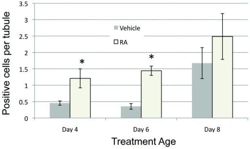 Figure 3. RA induces cell apoptosis in the neonatal male testis. The average number of TUNEL-positive cells per tubule after vehicle or RA treatment at each treatment age is shown. Filled bars represent data from vehicle treated animals and open bars represent data from RA treated animals. All error bars represent the standard error of the mean. *p < 0.05.