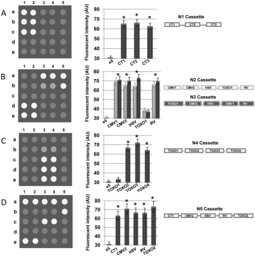 Schematic diagrams and quantitative analysis of the des open i schematic diagrams and quantitative analysis of the designed cassettes hybridization with biochipe arrangement of ccuart Image collections