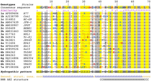 Sequence analysis of the N-terminal part of HCV NS4B.Multiple alignment of NS4B amino acid (aa) 1–70 sequences from representative HCV strains of confirmed genotypes [66] are shown (http://euhcvdb.ibcp.fr; [41]). Genotype, GenBank accession number, and strain are indicated for each sequence. Amino acids are numbered with respect to NS4B (top row). The consensus sequence (top row) was deduced from the ClustalW multiple alignment of the indicated NS4B sequences [43]. To highlight the aa variability at each position, aa identical to the consensus sequence are indicated by hyphens. The degree of aa physicochemical conservation at each position can be inferred from the similarity index according to ClustalW convention (asterisk, invariant; colon, highly similar; dot, similar) [43] and the consensus hydropathic pattern: o, hydrophobic position (Pro, Val, Leu, Ile, Met, Phe, Tyr, Trp); n, neutral position (Gly, Ala, Ser, Thr); i, hydrophilic position (Asn, Gln, Asp, Glu, His, Lys, Arg); v, variable position (i.e. when both hydrophobic and hydrophilic residues are observed at a given position). To highlight the variable sequence positions in NS4B, conserved hydrophilic and hydrophobic positions are highlighted in yellow and gray, respectively. Residues are color-coded according to the Wimley and White hydrophobicity scales [67]: hydrophobic residues are black (Pro, Val, Leu, Ile, Met, Phe, Tyr, Trp); polar residues are orange (Gly, Ala, Ser, Thr, Asn and Gln); positively and negatively charged groups of basic (His, Lys, Arg) and acidic residues (Glu, Asp) are blue and red, respectively. Consensus secondary structure predictions of NS4B from representative HCV strains (Second. struct. cons.) are indicated as helical (h, blue) or undetermined (coil [c], orange). Predictions were made by using the web-based algorithms SOPM, HNNC, DSC, GOR IV, PHD, Predator and SIMPA96 available at the NPSA website (http://npsa-pbil.ibcp.fr; [42] and refs. therein). NMR AH2 structure (bottom row) denotes the conformation of residues determined previously by nuclear magnetic resonance (PDB entry 2JXF; [26]). Residue conformations are indicated as helical (H) or undetermined (C).
