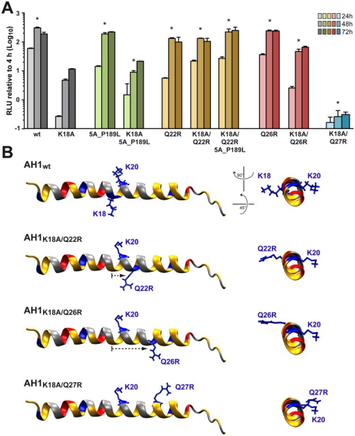Analysis of pseudorevertants selected with NS4B AH1 mutant K18A.(A) Selected amino acid changes identified following transfection of a selectable subgenomic replicon harboring the NS4B AH1 K18A mutation (see Table 1) were reengineered into a subgenomic HCV replicon harboring a luciferase reporter gene. In vitro transcribed RNAs were electroporated into Huh-7.5 cells, followed by luciferase activity measurement at 4, 24, 48 and 72 h post-electroporation. Relative light units (RLU) were normalized to values measured at 4 h. Results from two independent experiments were pooled (n = 8 for each construct and time point). For statistical analyses, RLU measured at 48 h were compared to the 48-h values obtained with mutant K18A. *, P<0.001. (B) Structure models of the different AH1 sequences were established by using Swiss-PdbViewer 4.01 software [69] and drawn by using VMD 1.9 software [68].