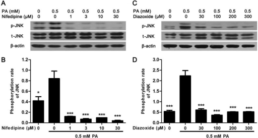 Nifedipine and diazoxide suppressed PA-induced phosphorylation of JNK.(A) After MIN6 cells were treated in 0.5 mM PA with/without different concentration of nifedipine for 48 h, the phosphorylation of JNK was detected by western blot. (B) The phosphorylation rate of JNK was calculated as optical density of phosphorylated-JNK (p-JNK) divide by total JNK (t-JNK). * p<0.05; *** p<0.001 denote significant difference versus the PA-treated alone group, n = 3. (C) After the cells were treated in 0.5 mM PA with/without different concentration of diazoxide, the phosphorylation of JNK was detected by western blot. (D) The phosphorylation rate of JNK was calculated. *** p<0.001 denote significant difference versus the PA-treated alone group, n = 3.