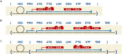 Example of three different designs for localization studies purposes as developed with the plant grammar.A. Scheme of the most basic structure we can design, where the expression cassette includes the GEN fused to a FTG by means of a LNK domain on the N terminal. B. Sample design includes an expression cassette with 2 PRO and a GEN fused to a FTG on the N terminal and to an ETG on the C terminal. C. Same as B but with the expression cassette in reverse orientation.