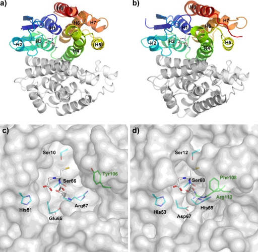 Active site pockets of DmGSTE6 in comparison with dmGSTD1Arrangement of helices in dmGSTD1 (a and c) and DmGSTE6 (b and d) contributes to the shape of active site pockets. Stick representation of glutathione is in white and its interacting residues from the N-terminal and the C-terminal domain are in cyan and green, respectively. Tyr106 in panel c is for comparison only.