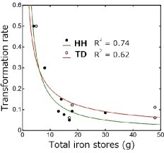 Two power regression curves resembling one another with an inverse correlation between transformation rates and pre-existing total iron stores in hereditary hemochromatosis (HH),5-7) and between transformation rate and final total iron stores in transfusion-dependent anemia (TD) are shown.The transformation rate for HH is proportional to the –1.1th power of pre-existing total iron stores, and that for TD is proportional to the –0.72th power of final total iron stores.