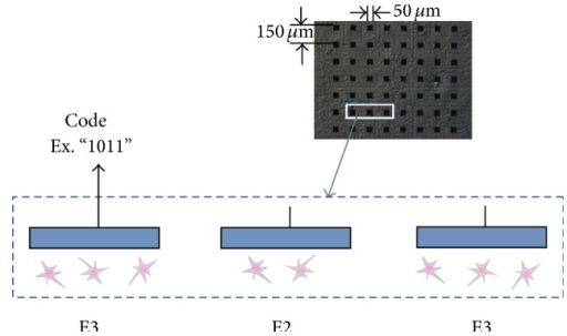 "(Upper) Micrograph of cultured hippocampal neurons in a microelectrode array. Black rectangles indicate electrodes. (Lower) Illustration of a vertical section. Each electrode catches spikes from several neurons. We can observe spike trains containing code such as ""1011."" Each bit (""1"" or ""0"") is considered from different neuron for short time length (short bit width) code, since it takes more time for the same neuron to fire twice than the refractory period."