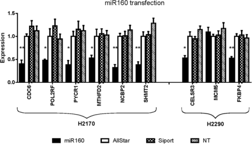 Effect of miR160 transfection on targets expression.Ratio of expression of tested genes after transfection of miR160 in two NSCLC cell lines compared to expression in negative control (AllStars, scrambled sequence). siPORT = transfection reagent. NT = not treated. p-values (t-test): *0.05–0.01, **0.01–0.001.