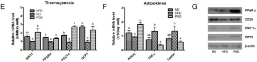Effects of PGE on body fat mass, energy expenditure, and mRNA expression of adipogenic and thermogenic genes via regulation of fatty acid oxidation in epididymal white adipose tissue in HFD-fed C57BL/6J mice. The data are the mean ± SEM (n = 10). (A) The weight of adipose tissue; (B) representative photographs of adipocytes in the epididymal WAT of the mice, 200× magnification; and (C) energy expenditure and oxygen consumption (Vo2). Adipogenesis (D); thermogenesis (E); and adipokine (F) related gene expression. (G) Western blot analysis of β-actin, PPARγ, CD36, PGC1α, and CPT2 expression. ND, mice fed a normal diet; HFD, mice fed a high-fat diet (HFD) alone; PGE, Platycodon grandiflorus root extract (5%, w/w)-treated HFD-fed mice; WAT, white adipose tissue.