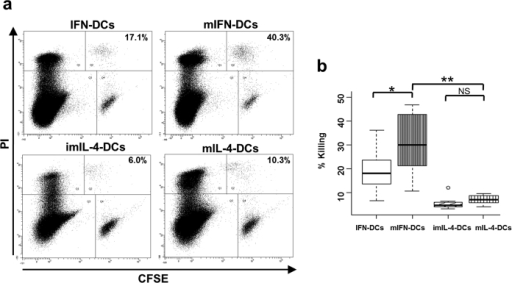 The killing activity of mIFN-DCs is stronger than that of IFN-DCs and, particularly, mIL-4-DCs.(a) CFSE-labelled K562 cells were incubated with indicated DCs at a ratio of 50:1 for 18 h. Incubated cells were subsequently subjected to flow cytometry and gated on a FSC and SSC dot plot to identify single cells. Subsequently, the gated cells were subgated according to CFSE and PI staining. DC killing activities are shown as percentages in the dot plot panels (representative of N = 11). (b) DC killing activity against K562 cells is indicated in the box plot (N = 11). *p < 0.05, **p < 0.01.