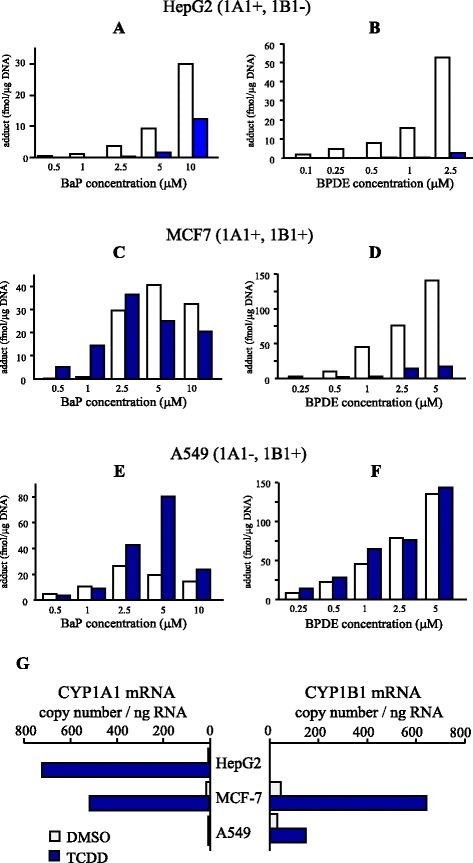 TCDD-mediated modulation of BaP adducts in various human cell lines. Hepatoma cell line HepG2 (a, b), breast carcinoma cell line MCF7 (c, d), and lung carcinoma cell line A549 (e, f) were co-treated with BaP (0.5–10 μM; a, c, e) or BPDE (0.1–5 μM; b, d, f) with or without TCDD. Closed columns represent adducts by 10 nM TCDD treatment and open columns represent adducts by solvent control (DMSO). After 16 h of incubation, genomic DNA was isolated and DNA adducts were detected by 32P-postlabeling and PAGE. G: CYP1A1 and 1B1 mRNA expression in the three cell lines. Each cell line was exposed to 10 nM TCDD or DMSO for 24 h and total RNA was extracted. For the quantitation of specific transcripts, real-time PCR was performed. These figures are adapted from data reported previously [24]
