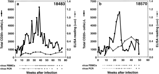CD20+ lymphocytes, antibody response, and RRV strain 17577 isolation/detection in SIVmac-infected animals. Total CD20+ cells were measured at the indicated weeks after infection, virus isolations (virus PBMCs) were determined by coculture of PBMCs with primary rhesus fibroblasts, and the presence of vDNA (virus PCR) was determined by PCR analysis on DNA derived from PBLs. Detection of antibodies to RRV strain 17577 were determined by ELISA on plates coated with extracts derived from RRV-infected cells. +, positive for virus culture or vDNA, as defined by PCR and Southern blot analysis; −, negative virus culture or vDNA. Animals 18483 (a) and 18570 (b) were experimentally inoculated with SIVmac239 and RRV strain 17577, animals 18503 (c) and 18540 (d) were experimentally inoculated with SIVmac239 only, and animals 19092 (e) and 19286 (f) were experimentally inoculated with RRV strain 17577.