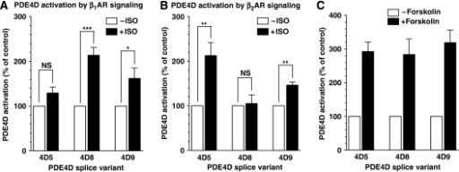 Selective activation of PDE4D splicing variants after stimulation of β1AR and β2AR. (A, B) Neonatal cardiac myocytes derived from mice deficient in β2AR were stimulated for 3 min with 100 nM ISO (A) and cells deficient in β1AR were treated for 3 min with 10 μM ISO (B). At the end of incubation, cells were lysed, PDE4D5, 8, and 9 were immunoprecipitated with variant-specific antibodies, and the PDE activity recovered in the IP pellet was measured. Data shown are expressed as the means±s.e.m. of at least three experiments performed. (C) Activation of PDE4D splice variants after treatment of neonatal cardiac myocytes with 100 μM Forskolin for 20 min. Shown is the average of five experiments; three experiments performed using myocytes deficient in β2AR and two experiments using cells deficient in β1AR. NS (P⩾0.05); *(P<0.05); **(P<0.005); ***(P<0.0005).