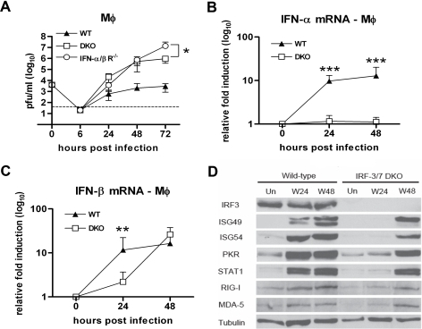 IRF-3 and IRF-7 partially modulate the IFN-β response and ISG expression in primary Mφ.A. Mφ generated from wild type, IFN-αβR−/− and DKO mice were infected at an MOI of 0.01 and virus production was evaluated at the indicated times post infection by plaque assay. Values are an average of quadruplicate samples generated from at least three independent experiments. B. Whole cell lysates were generated at the indicated times from wild type and DKO Mφ that were uninfected (Un) or infected with WNV (W). Protein levels of ISG49, ISG54, PKR, STAT1, RIG-I, MDA5 and tubulin were examined by immunoblot analysis. C and D. The induction of (C) IFN-α and (D) IFN-β mRNA in WNV-infected Mφ was analyzed by qRT-PCR as described in Figure 3. Asterisks indicate values that are statistically significant (***, P<0.0001, **, P<0.005, *, P<0.05).