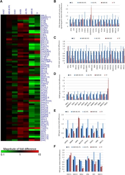 comparative analysis of dna damage in Comparative analysis of interaction of human and yeast dna damage recognition complexes with damaged dna in nucleotide excision repair.