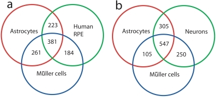 Overlapping genes in transcription profiles from Müller cells, astrocytes and retinal pigment epithelium (RPE).Intensity signals for the top 2000 probes were used to generate sets of overlapping genes. The astrocyte and RPE transcriptome data are derived from published studies (56,57). Müller cell data represent signals from cells not exposed to CNTF. (a) The diagram shows that 381 transcripts were common to the three cell types, while 642 were shared between Müller cells and astrocytes, 565 between Müller cells and the RPE, and 604 between astrocytes and RPE. (b) Diagram showing overlap of transcripts among astrocytes, Muller cells and neurons. The neuron transcriptome data was obtained from a published study (56).
