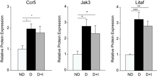 Protein expression not normalized by insulin treatment. Increased expression of Ccr5, Jak3, and Litaf1 was confirmed by immunoblotting. One-way ANOVA, Student Newman Keuls pair-wise post-hoc test, *P < 0.05, **P < 0.01, ***P < 0.001 for 3 month data; n = 5-7/group. ND - Non-Diabetic control, D - Diabetic, D+I - Insulin-treated Diabetic, 1 M - 1 month, 3 M - 3 Months.
