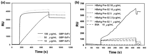 SPR sensorgrams. (a) Optimization of the concentration of 6HGBP-ScFv fusion protein. (b) SPR detection of target antigen, HBsAg, with 6HGBP-ScFv as a receptor.