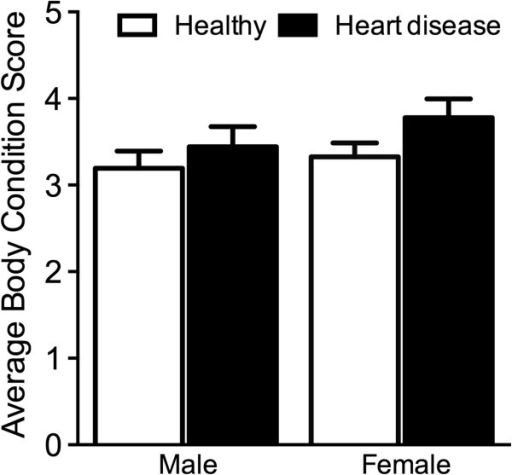 Average body condition score (mean ± SE) of male and female dogs from healthy and heart disease groups.