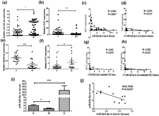 Clinical investigation of miR-424-5p in the liver cancer tissues and sera samples from HCC patients.(a–b) The expression of miR-424-5p (a) and ICAT (b) in HCC tissues and corresponding non-cancerous liver tissues were determined by real-time PCR. (c–d) Correlation between the expression of miR-424-5p and ICAT in both cancer tissues(d) and non-cancerous tissues (d) were analyzed by Spearman correlation analysis. (e–f) Expression of miR-424-5p(e) and ICAT(f) in metastatic HCC tissues and non-metastatic HCC tissues were determined by real-time PCR. (g–h) Correlation between the expression of miR-424-5p (g) and ICAT (h) in metastatic HCC tissues and non-metastatic tissues were analyzed. (i) miR-424-5p expression in the sera from metastatic HCC patients, non-metastatic HCC patients and healthy controls were analyzed by real-time PCR. (j) In those patients whose sera and liver tissue specimen were both available, expression of miR-424-5p in both the sera and liver tissues were detected; and the correlation of miR-424-5p expression in sera and that in liver tissues were further analyzed. *P<0.05, **P<0.01,***P<0.001.