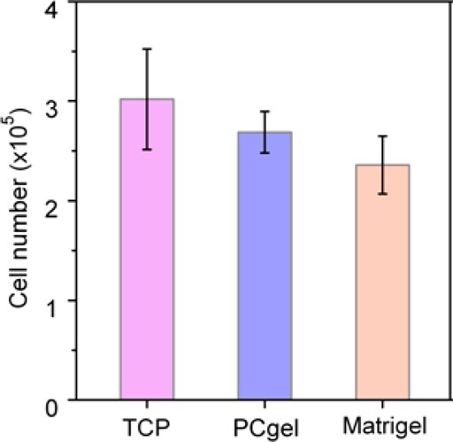 Biocompatibility of the PCgel. The numbersof T lymphocytes culturedon a TCP, PCgel, and Matrigel quantified using AlamarBlue after a24 h culture.