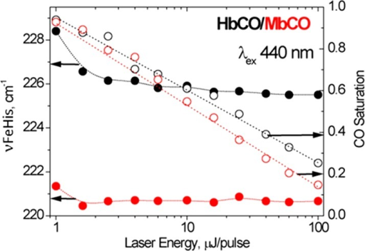 νFeHis (filled circles) and CO saturation (open circles)in HbCO (black) and MbCO (red) solutions, as functions of the incident16 ns laser pulse energy.