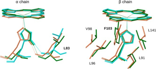 Overlay of heme, the proximal histidine,and relevant contactingresidues for the initial (light brown) and intermediate (green) PELEstructures, and for deoxyHb (PDB 1A3N;8 cyan).