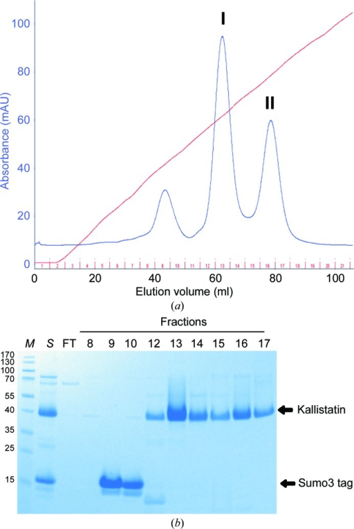 Purification of recombinant kallistatin by ion-exchange chromatography. The Sumo3-kallistatin fusion protein was cleaved with SENP2 and the mixture (lane S) was loaded onto a HiTrap SP column. The protein was eluted with an NaCl gradient from 0 to 1 M, measuring the absorbance at a wavelength of 280 nm (a). Flowthrough (FT) and fractions from elution were analysed by SDS–PAGE (b). Fractions from peak I (13 and 14) and peak II (15–17) were pooled separately and subjected to crystallization trials. Lane M contains molecular-weight marker (labelled in kDa).