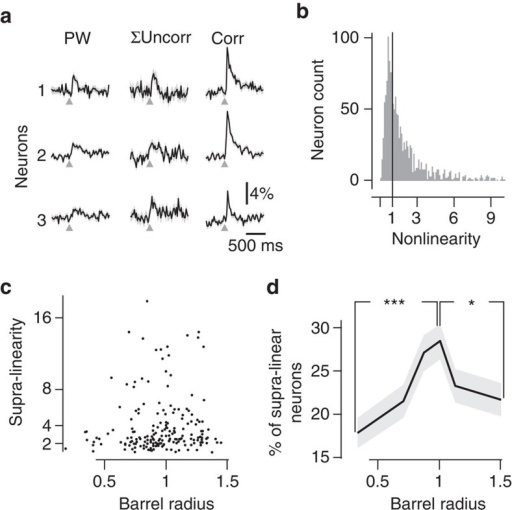Nonlinearity of neuronal responses to correlated multi-whisker stimulations.(a) Three examples of neurons' functional responses to PW stimulation (left), sum of the response to PW and two closest adjacent whiskers (middle), and to correlated stimulation (right). (b) Distribution of the NL index. Sixty-eight per cent of neurons are supra-linear. (c) Radial distribution of NL for significantly supra-linear neurons (that is, bootstrap-derived response P<0.05). (d) The radial distribution (517 neurons per bin) of the proportion of supra-linear neurons (NL>1), among all responsive neurons, shows a significant peak. *Mann–Whitney P=1.4E-2. ***P=9.0E-5.