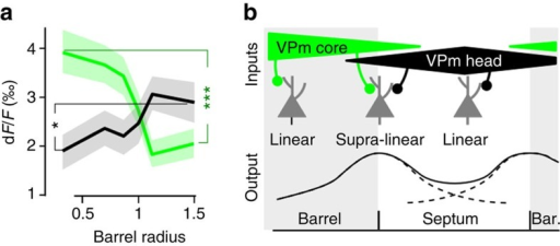 A model of multi-whisker supra-linear integration in barrel cortex layer 2/3.(a) Radial distribution of mean dF/F response to the PW (green) and to the sum of the two closest adjacent whiskers (black). ***Mann-Whitney P=8.1 × 10−4 for PW and *P=0.024 for adjacent whiskers. (b) A simple model of the projections to the barrel and septal compartments. A supra-linear integration of VPm-head and VPm-core inputs during correlated stimulation may occur in neurons above the barrel-septa border that receive both inputs, while neurons above barrel centre and septum centre mainly receive a single source of input and are therefore not subjected to the same mechanism. Bar., barrel.