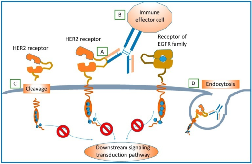 how to open receptor sites for nutrition