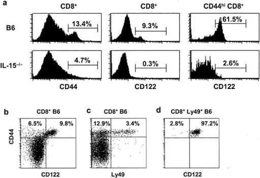 A subset of CD44hi CD8+ T cells is IL-15 dependent. (a) Histograms show expression of CD44 on gated CD8+ cells and CD122 on gated CD8+ and CD44hi CD8+ cells from LN of wild-type B6 versus IL-15−/− mice. (b–h) The data show CD122 or Ly49 versus CD44 expression on gated CD8+ LN T cells from wild-type B6 mice (b–d), IL-15−/− mice (e and f), CD122−/− mice (g), and IL-2−/− mice (h). The data are representative of >4 mice (aged 2–3 mo)/group and also applied to CD8+ spleen and peripheral blood cells (not shown). In d, data refer to gated Ly49+ CD8+ T cells. In all groups, Ly49 was detected using a panel of anti-Ly49A, C/I, F, and G2 mAbs that have previously been shown to be the most abundantly expressed Ly49 family members on CD8+ T cells in B6 mice (reference 20).
