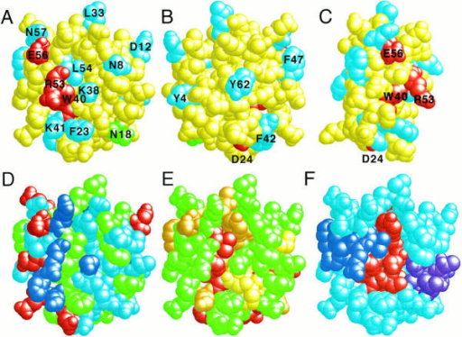 Location and properties of the proposed active site of CD59. (A–C) Mutagenesis data. The residues which were mutated are all numbered  and those whose mutation reduced protection (* in Fig. 1) or had no effect are colored red and light blue, respectively. N18, which is N-glycosylated, is  colored green. Back (B) and side (C) views differ from the front view (A) by 180° and 90°, respectively. (D) Chemical features. Hydrophobic residues are  colored green, polar uncharged residues, light blue, positively charged residues, dark blue, and negatively charged residues, red. The view is the same as  in A. (E) Conserved residues. Non-cysteine residues that are conserved in all known CD59 sequences and HVS-15 (inverse-shaded black in Fig. 1) are  colored red and those conserved in all sequences with one exception (inverse-shaded gray in Fig. 1) are colored orange. Cysteine residues, which are also  conserved in all sequences, are colored yellow. The view is the same as in A. (F) Secondary structure. The positions of the two- and three-stranded β-sheets  (purple and red, respectively) and the α-helix (dark blue) of CD59 are shown. Loop residues are colored light blue. The view is the same as in A. All of the  experimental data are superimposed on the lowest energy NMR structure (19) drawn using Rasmol (46).