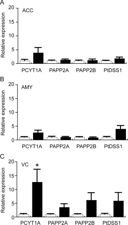 Quantitative real-time PCR analysis of selected glycerophospholipid-related genes in the anterior cingulate cortex (ACC), amygdala (AMY) and visual cortex (VC) of control (Con) and Parkinson's disease (PD) tissues.The expression of genes involved in the glycerophospholipid biosynthetic pathway (see Fig. 6) was assessed by qRT-PCR. Data for all genes are expressed relative to the control values (Con  =  white bars, assigned a value of 1.0; PD  =  black bars). The data are presented separately for ACC (A), AMY (B) and VC (C). Phosphocholine cytidylytransferase 1a (PCYT1A); Phosphatidic acid phosphatase 2a (PPAP2A); phosphatidic acid phosphatase 2B (PPAP2B); Phosphatidylserine synthase I (PtDSS1). Data represent mean ± SEM, *p<0.05 by t-test.